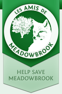Les Amis de Meadowbrook