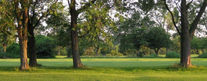 Meadowbrook-July-2010-4-Trees-Reduced-and-cropped-1024x402