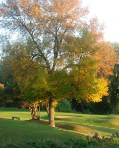 Fall Tree Meadowbrook Sept 2014.Nigel Dove