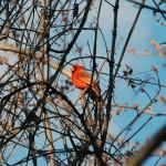 meadowbrook spring 2015 103